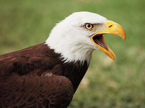 14516_thinkstockphotos-533055173 FWS Seeks Comment On Proposed Improvements To Eagle Conservation Program