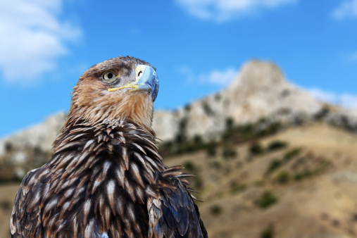 FWS Responds To Request For Eagle Take Permit At SoCal Wind Farm