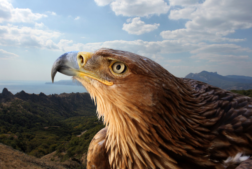 ThinkstockPhotos-184796131 Feds Officially Cut Back Period For Wind Farm Eagle Take Permits