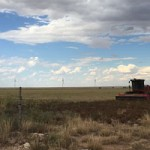 Allianz, BoFA Merrill Lynch Invest In New Mexico Wind Farms