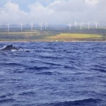 Hawaii Utilities Tout Record-High Clean Energy Use For 2015