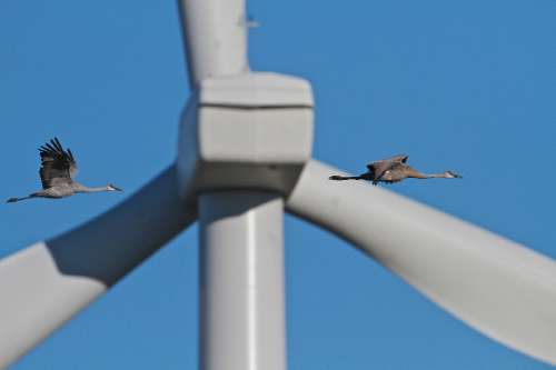 Bartholmai_IMG_0806 DOI Study: Many Turbines In Great Plains Pose Little Threat To Sandhill Cranes