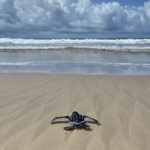 Federal Study: Marine Wildlife Not Affected By MA, RI Offshore Wind Areas