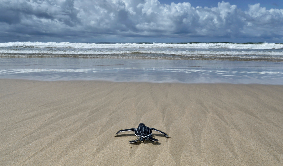 iStock_66769191_SMALL Federal Study: Marine Wildlife Not Affected By MA, RI Offshore Wind Areas