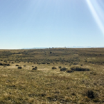 BayWa r.e. Wind Completes Project Acquisition In Montana