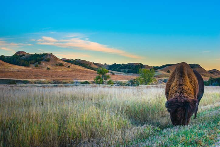 bison-great-plains Report: The Rise Of Corporate Wind PPAs In The Great Plains