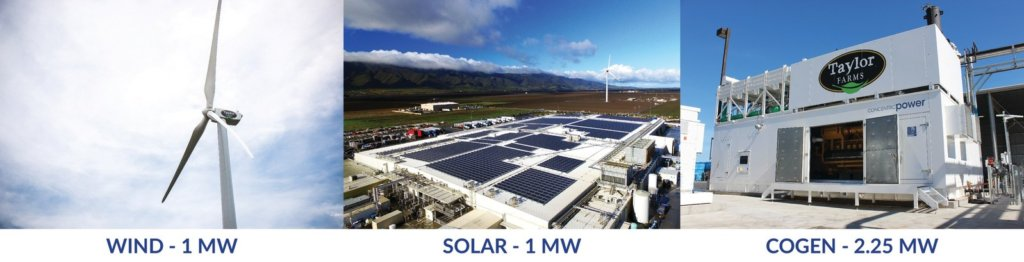 1-1024x262 Calif. Produce Company Combines Wind, Solar And Cogeneration