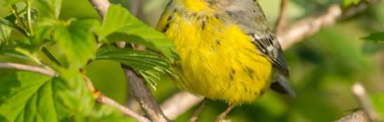 Wind 'Does Not Belong' On Great Lakes Shores: American Bird Conservancy
