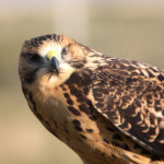 Bird Concerns Lead To Denial Of Saskatchewan Wind Farm