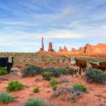 Arizona Utility Seeks Large Renewable Energy Projects