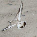 Federal, University Partners Conduct Wildlife Study At Block Island Wind Farm