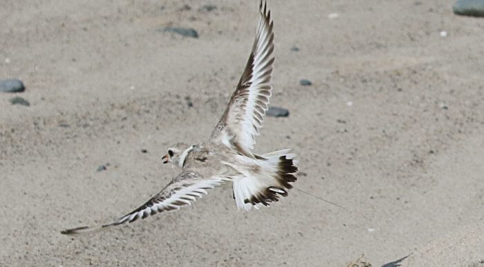 offshore-wildlife Federal, University Partners Conduct Wildlife Study At Block Island Wind Farm
