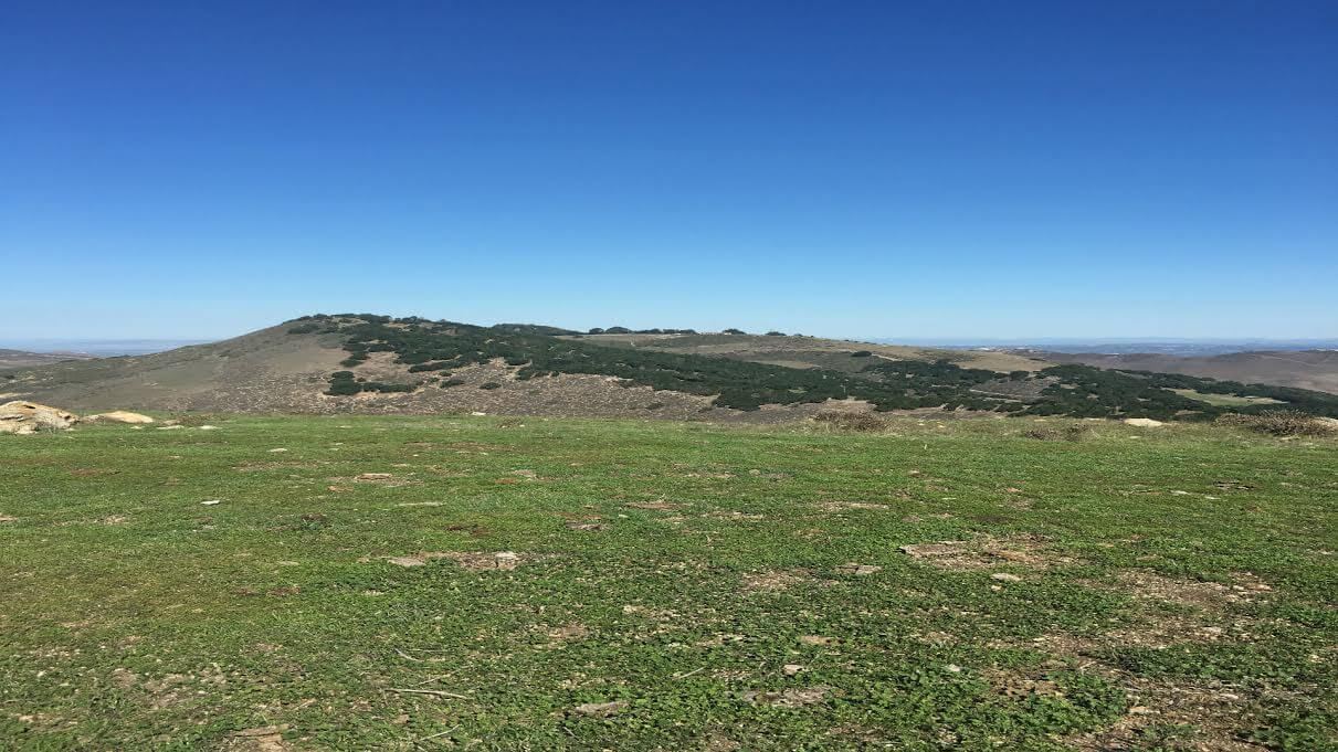 Baywa Lands Power Purchase Deal For California Wind Farm